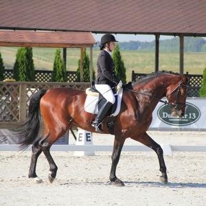 Фото лошади для изготовления картины