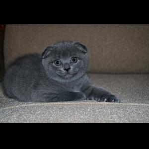 Фото котёнка