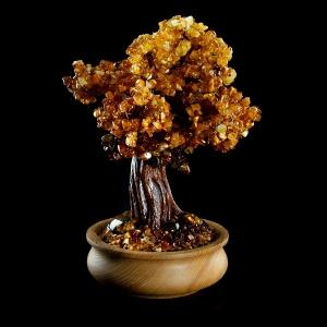Фото янтарного дерева